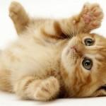 Video pentru copii – Pisica
