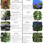 10 plante cataratoare pentru terase