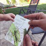 Cum am studiat noi pasarile si insectele in aceasta vara